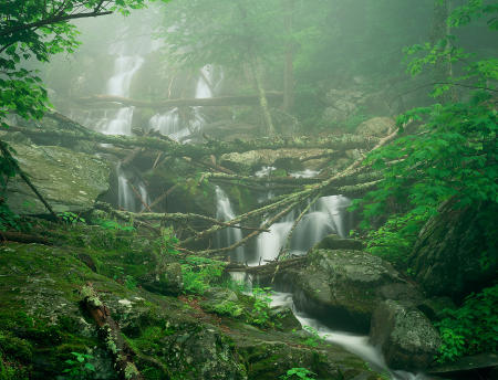 Dark Hollow Falls, Foggy June Day